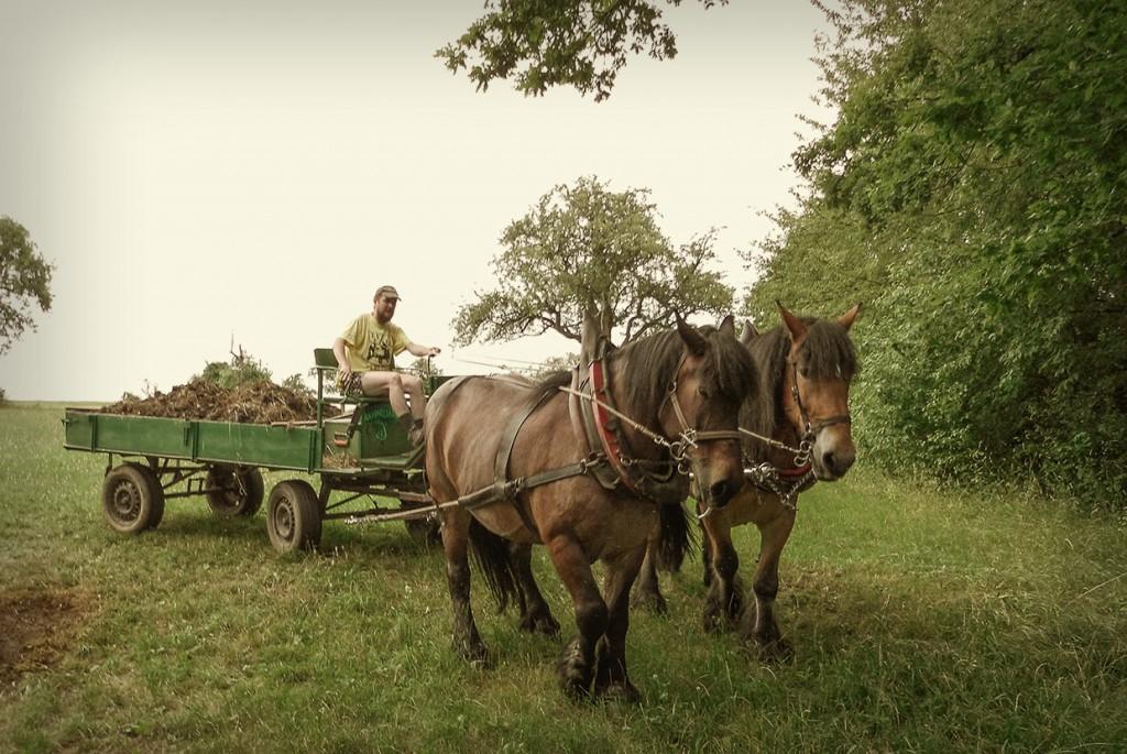 Die arbeit mit den pferden www akadem ru